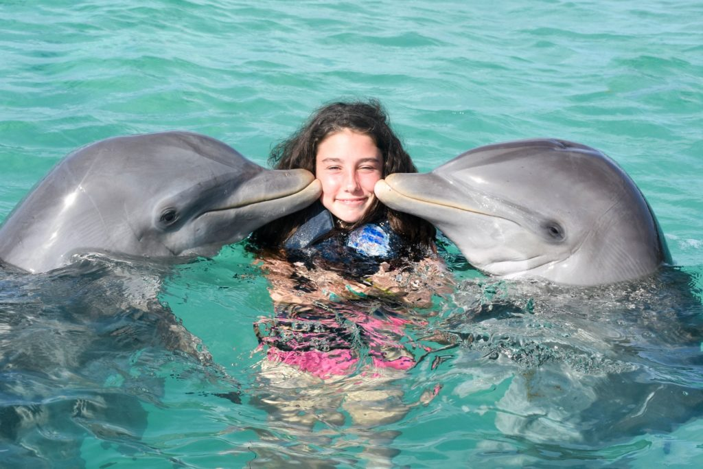 Swim with dolphins in Hawaii and get to know these friendly mammals